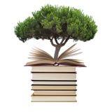 Libri con l'albero Fotografie Stock