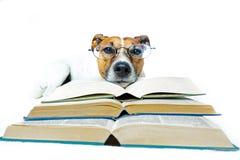 Libri di lettura del cane Immagini Stock