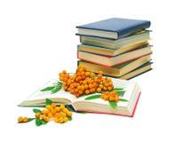 Libri e bacche di sorbo su una priorità bassa bianca Immagini Stock