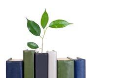 Libri ed albero Fotografia Stock Libera da Diritti