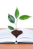 Libri ed albero Fotografia Stock