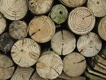 Libri macchina dell'albero di prugna Immagine Stock Libera da Diritti