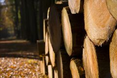 Libri macchina impilati del legname Fotografia Stock