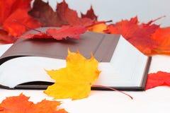 Libro aperto con le foglie di acero Immagine Stock