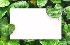 Libro Bianco sul fondo verde della foglia con spazio libero concentrare per il testo o il prodotto del montaggio Fotografie Stock