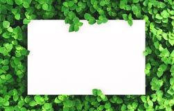 Libro Blanco en fondo verde de la hoja con el espacio libre de centro para el texto o el producto del montaje Fotos de archivo