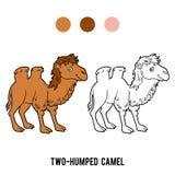 Libro da colorare, cammello Two-humped Immagine Stock Libera da Diritti