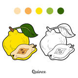 Libro da colorare per i bambini: frutta e verdure (cotogna) Fotografia Stock