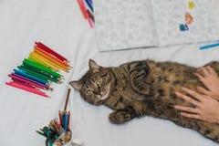 Libro de colorear adulto con un gato Fotografía de archivo