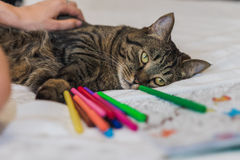 Libro de colorear adulto con un gato Imagen de archivo libre de regalías