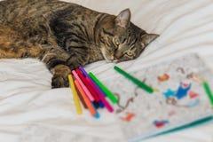 Libro de colorear adulto con un gato Imagen de archivo