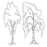 Libro de colorear de los árboles Esquema del abedul Foto de archivo
