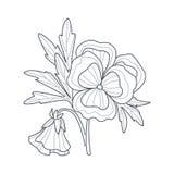 Libro de colorear de Pansy Flower Monochrome Drawing For Fotos de archivo libres de regalías