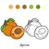 Libro de colorear: frutas y verduras (albaricoque) Foto de archivo libre de regalías