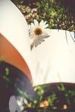 Libro de flores fotografía de archivo libre de regalías