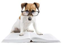 Libro de lectura elegante del perro imagen de archivo libre de regalías
