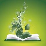 Libro del gambo di una pianta di fagioli Immagini Stock Libere da Diritti