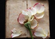 Libro del vintage con los pétalos color de rosa caidos Fotos de archivo