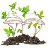 Libro della pianta Fotografia Stock