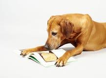 Libro di lettura del cane Fotografia Stock