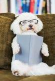 Libro di lettura del cane Immagine Stock