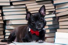 Libro di lettura del cane nero Immagini Stock