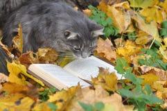 Libro di lettura del gatto Immagine Stock