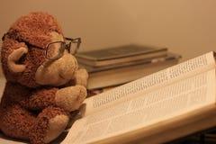 Libro di lettura della scimmia Fotografia Stock
