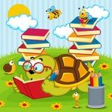 Libro di lettura della tartaruga Immagini Stock Libere da Diritti