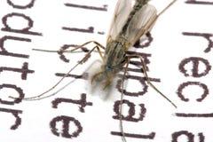 Libro di lettura della zanzara Immagine Stock