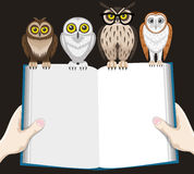 Libro e gufi Fotografia Stock