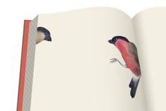 Libro ed uccelli Fotografia Stock