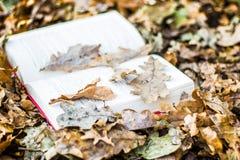 Libro en hojas de otoño Imágenes de archivo libres de regalías