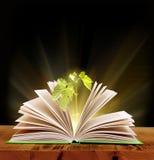 Libro mágico Foto de archivo