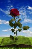 Libro mágico con una rosa en paisaje del verano foto de archivo