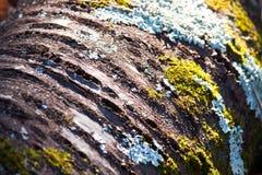Libro macchina dell'albero con il fungo ed il muschio Fotografia Stock