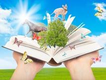 Libro mágico en manos humanas. Foto de archivo
