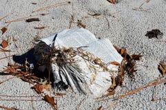 Libro nocivo acqua su una spiaggia immagini stock