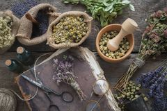 Libro, occhiali, bottiglie di tintura, assortimento delle erbe sane asciutte, mortaio Il perforatum di erbe di Medicine Vista sup immagine stock