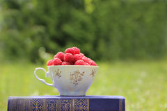 Libro sulla natura Una tazza del lampone che sta sul libro blu scuro Raccolto del lampone Immagine Stock Libera da Diritti