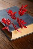 Libro viejo y una rama del dogrose Imagen de archivo libre de regalías