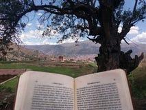 libro y árbol con las montañas en fondo foto de archivo libre de regalías