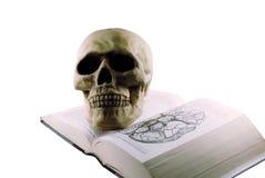 Libro y cráneo médicos fotografía de archivo