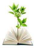 Libro y planta Imagen de archivo