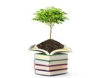 Libros con el árbol Imagen de archivo libre de regalías