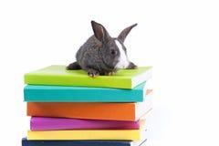 Libros de lectura del conejo Fotografía de archivo