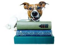 Libros de lectura del perro foto de archivo