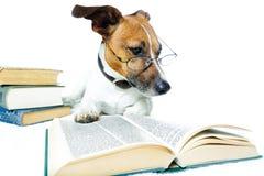 Libros de lectura del perro Imagen de archivo