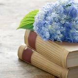Libros viejos con las flores azules románticas Fotografía de archivo