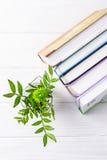 Libros y crisantemo verde en un fondo de madera blanco Visión superior, espacio libre Foto de archivo libre de regalías